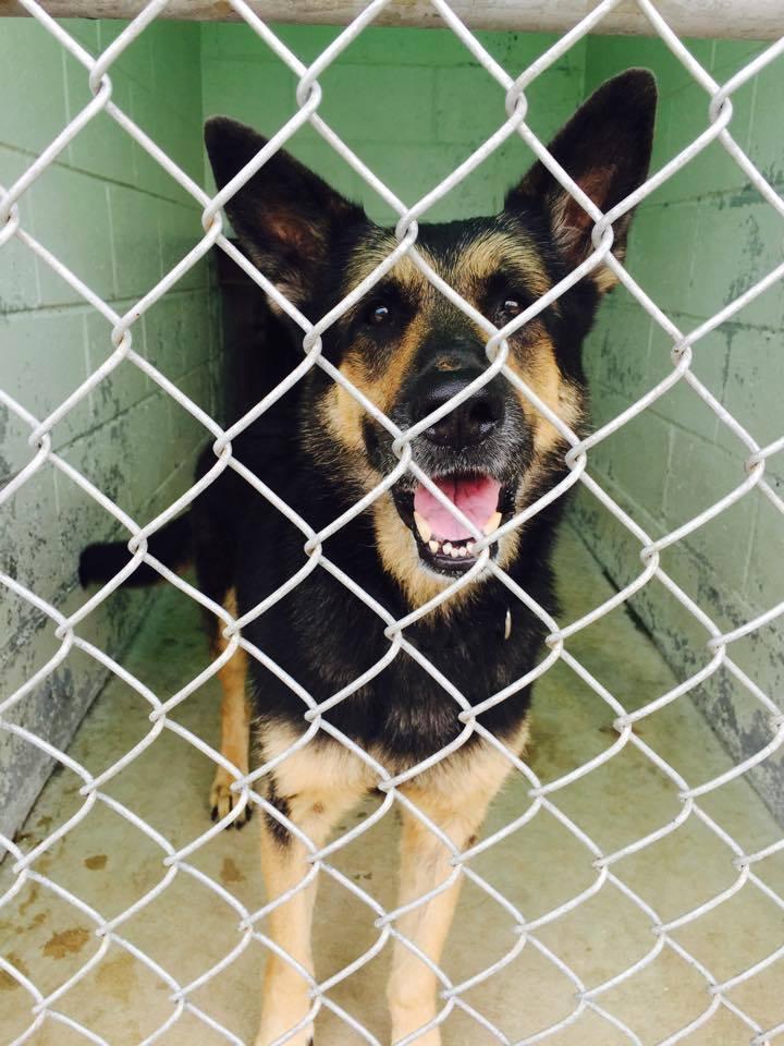 Hamilton County Dog Rescue