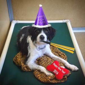 Adopt Frankie:  Monmouth County SPCA - Eatontown, NJ