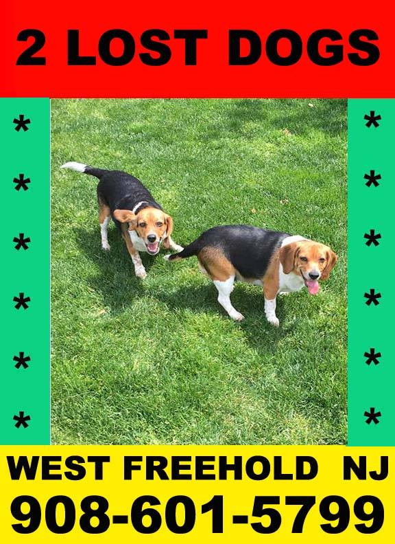 2 Lost Dogs in West Freehold, NJ