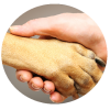 new dog care website NJ
