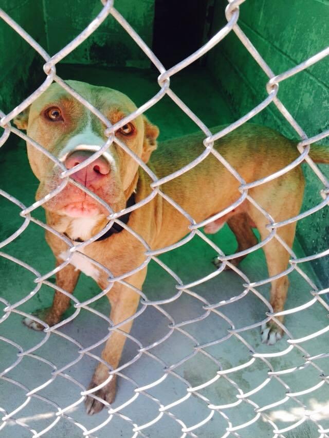 Found: Hamilton, NJ - Dog Walking at the Jersey Shore, Brielle
