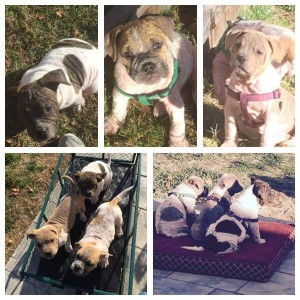 Adopt Jelly, Peanut & Butter:  Associated Humane - Tinton Falls, NJ
