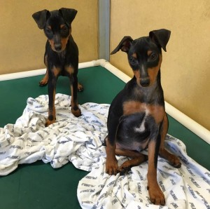 Adopt Donald & Davie:  Monmouth County SPCA - Eatontown, New Jersey