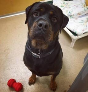 Adopt Samson - Monmouth County SPCA - Eatontown, NJ
