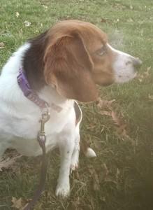Dog Found in Bridgewater, New Jersey