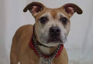 Adopt Sassy at the Friends of the Associated Humane Society - Newark. New Jersey