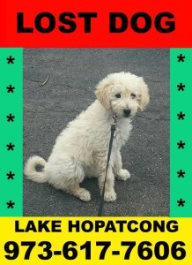 Lost Dog in Lake Hopatcong, New Jersey