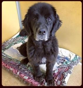 Adopt Lexi: Monmouth County SPCA - Eatontown, NJ